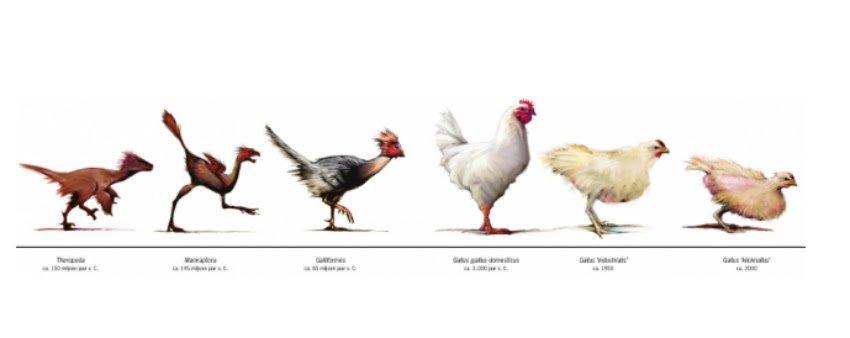 Teka-Teki Ayam dan Telur: Mana yang Lebih Dulu Ada?
