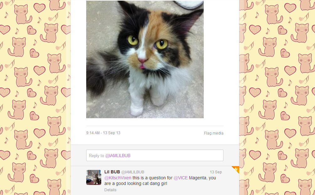 magenta, shelter cats, lil bub, bilbo bubbins, space cat, askBUB, twitter