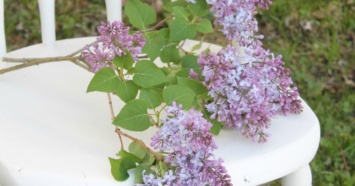 FARMHOUSE 5540 Weekly Inspiration Fresh Cut Flowers