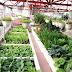 Top 7 loại rau sạch - củ quả sạch dễ trồng tại nhà