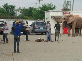 Breaking; Mysterious Elephant Appears In First Bank Lagos – Swallows 125Million (Live)