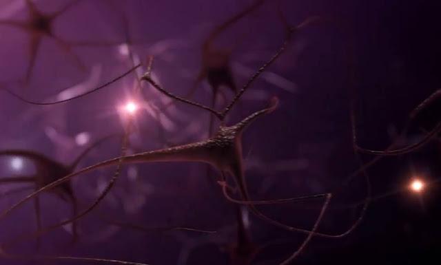 Cuando se aprende algo, el cerebro cambia físicamente. Se crean conexiones y otras se fortalecen, en un proceso llamado neuro-plasticidad.