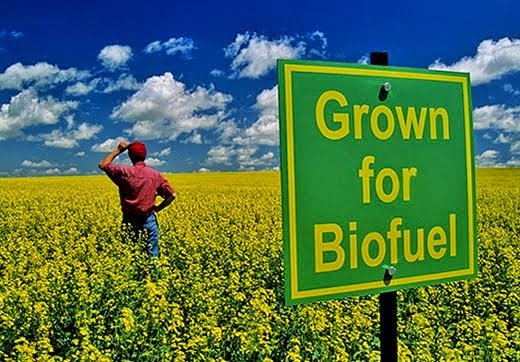 Bio fuel crop cultivation consultancy