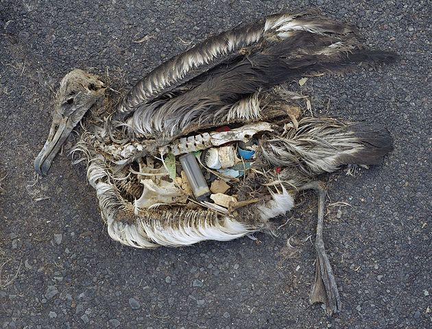 plastic of the Great Pacific Garbage Patch