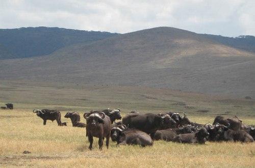 Mkomazi national park ipo mkoa gani