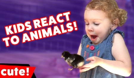 The Funniest Kids Reacting to Animal Videos of 2017 Weekly Compilation
