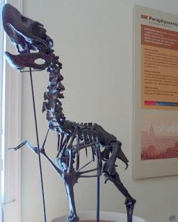 Fóssil de Paraphysornis brasiliensis, Museu Nacional do Rio de Janeiro
