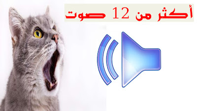 صوت القطط الأكثر تأثير فيها إذا سمعته من الجوال أو اللابتوب