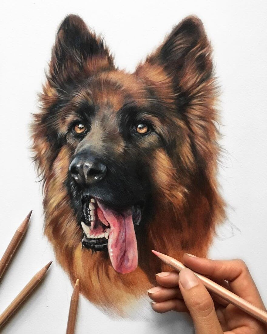 10-Roy-Patricia-Otero-Gorgeous-Expressions-in-Dog-Drawings-www-designstack-co