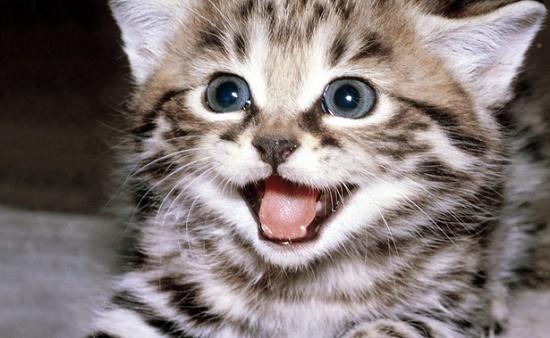 Cara Mengatasi Kucing yang Berisik