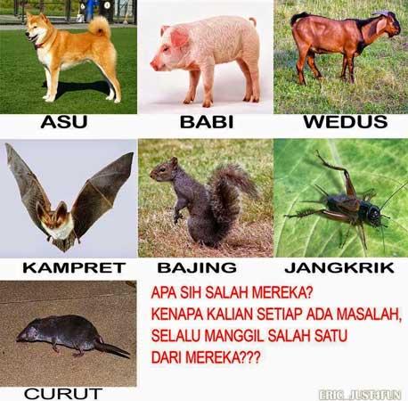 Foto Dp Meme Lucu Tentang Hewan