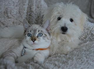 integracja kota z psem