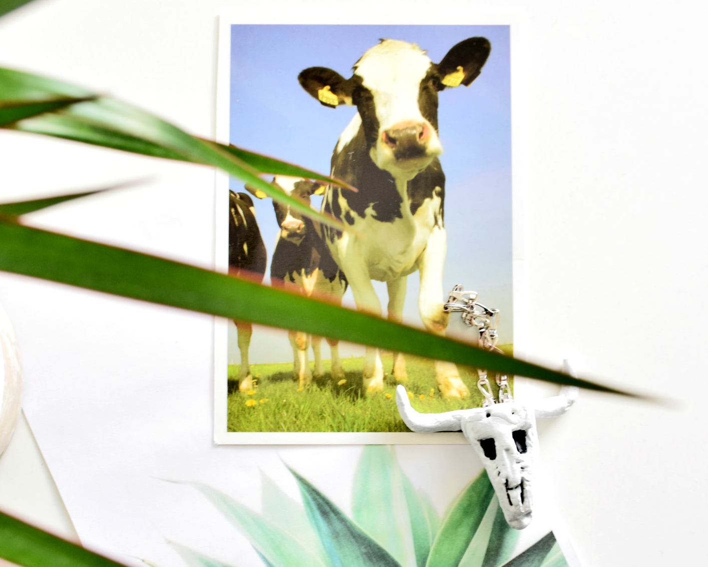 Symbole Holandii - Krowy