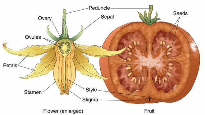 gardening aloft: blossom pollination simple diagram of molecular structure of dna