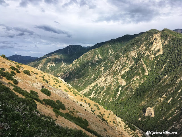 Hiking to Rattlesnake Gulch, Millcreek Canyon, Utah, Hiking with Dogs in Utah
