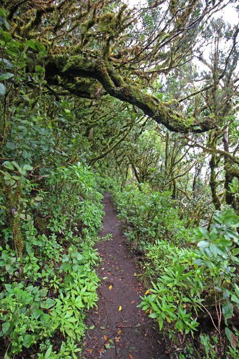 Wanderweg im Nebelwald auf La Gomera