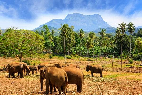 Шри-Ланка животные