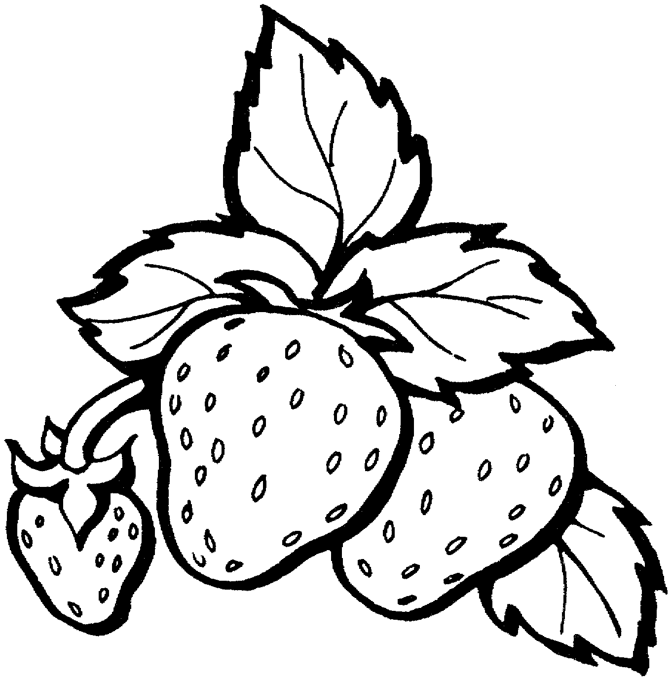 Gambar Mewarnai Buah Strawberry 4