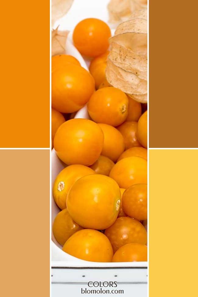 combinacion_novedades_de_color_3