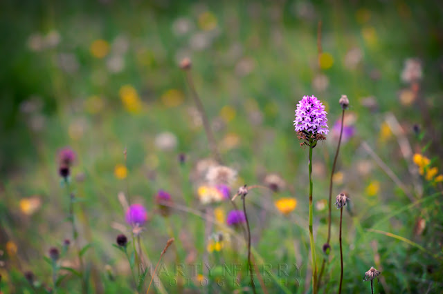 Nature photography from Barnack Hills & Holes of wildflower meadow