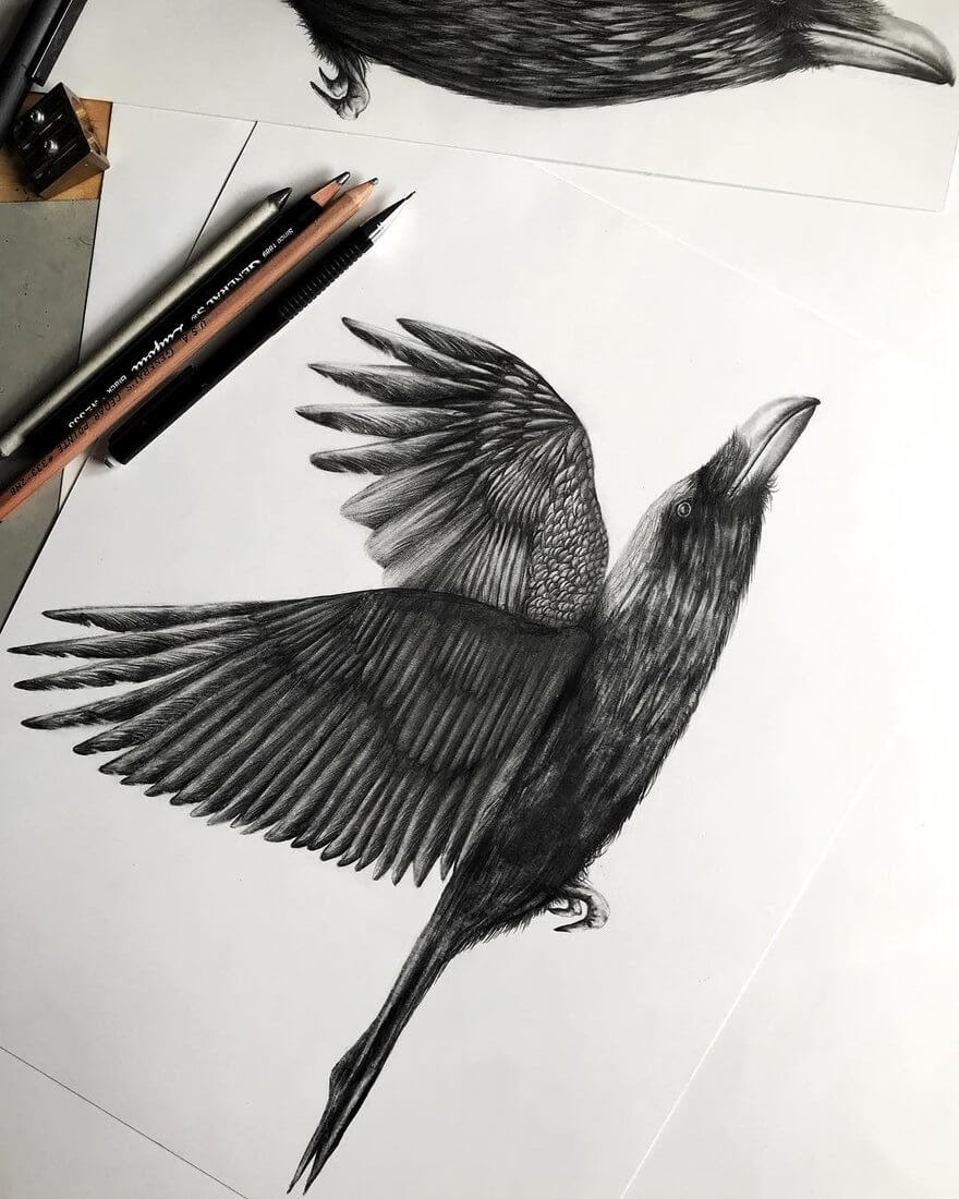 01-Raven-Taking-Flight-Jonathan-Martinez-Animal-Drawings-with-Colored-Pencils-www-designstack-co