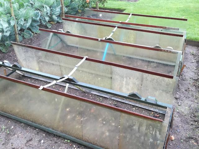 angielski ogród kuchenny, inspekty