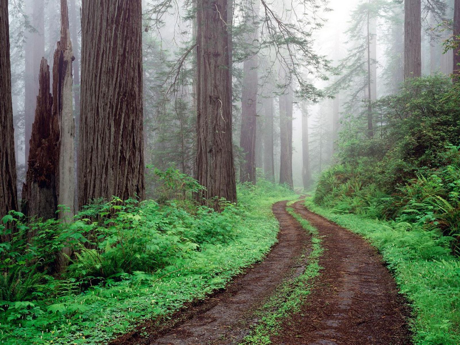 Forest Road Wallpapers Desktop Wallpaper