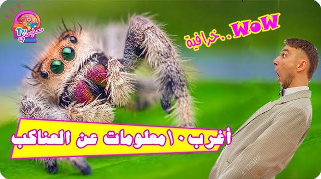 10معلومات مثيرة وغريبة عن العناكب-Strange things about spiders #معلومتيTv
