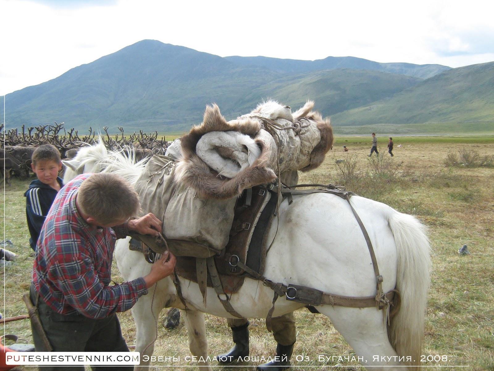 Эвен седлает лошадь