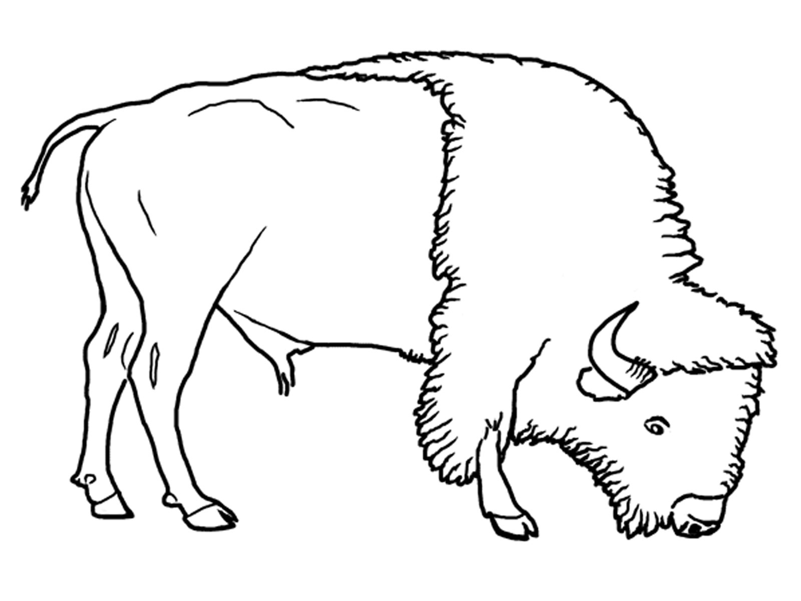 buffalo coloring pages printable - bison coloring pages for kids realistic coloring pages
