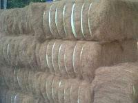 Sabut kelapa sumatera barat cv prima jaya niaga