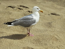 Zwitserw Katwijk Seagull Beach