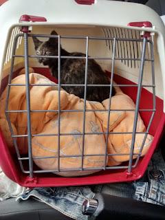 treball d'educació en teràpia assistida en animals
