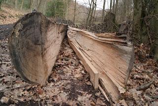 Ein in der Mitte gespaltener Baumstamm liegt am Wegesrand