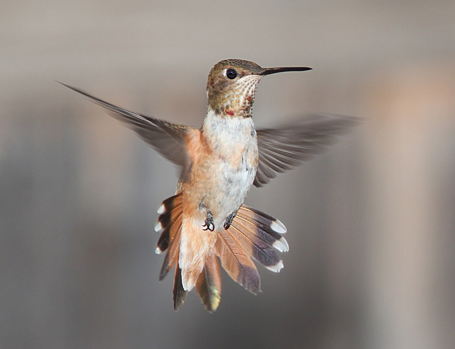 Once Inside The Birds Panic And Instinct Tells Them To Fly Up Get Out These Amazing That Can Forward Backward Down Sideways