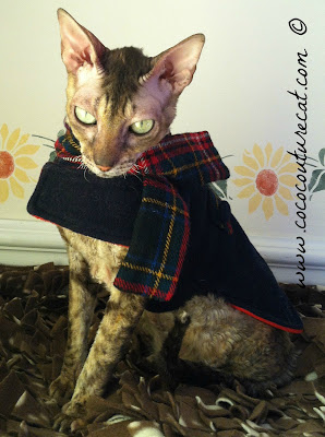 Coco the Cornish Rex cat in winter wool coat