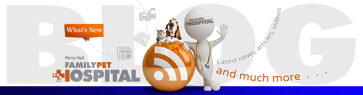 Family Pet Hospital Blog