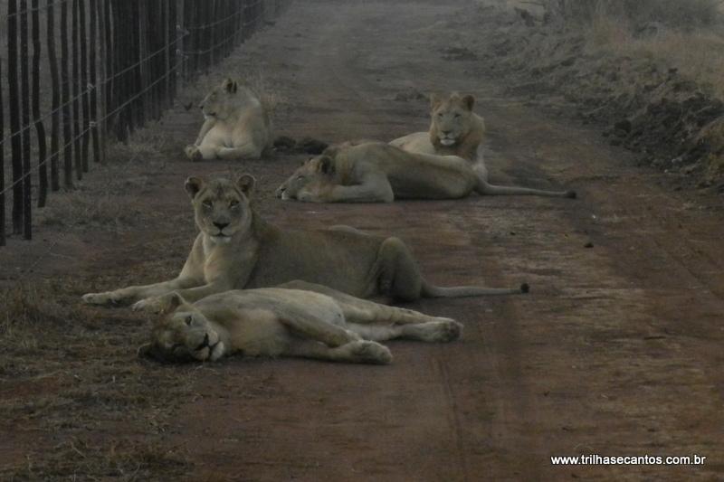 Hlane National Park Suazilândia