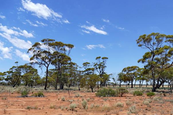 Outback, Landschaft, Australien, rote Erde