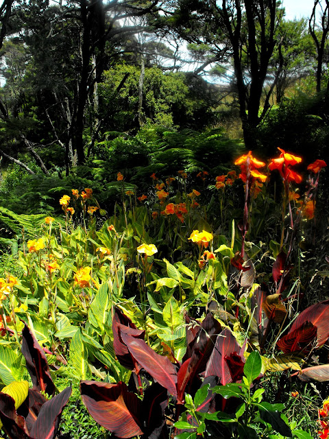 View into the native bush with yellow and orange Canna lilies