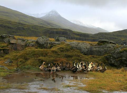 Islandzkie Fiordy wschodnie - tam, gdzie Huldufolk mówią dobranoc.