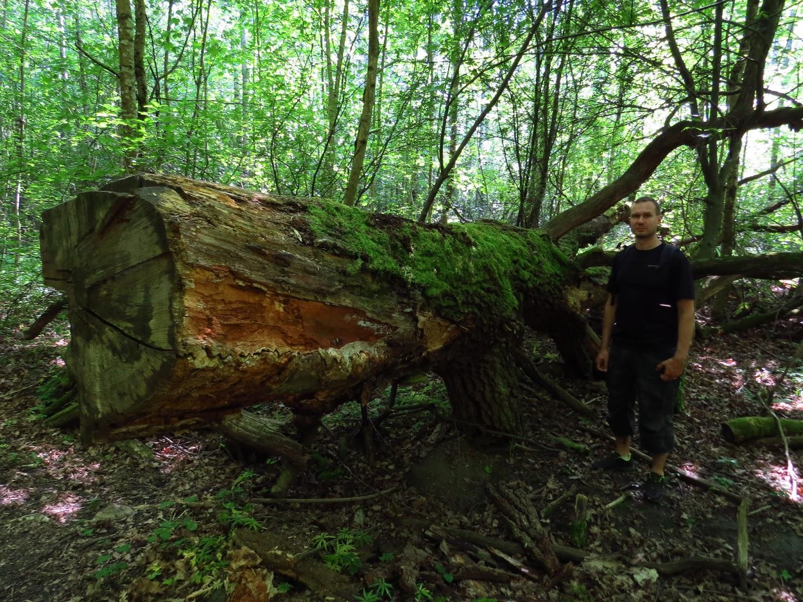 Sherwoodin Metsä