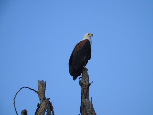 Fish Eagle Lake Naivasha
