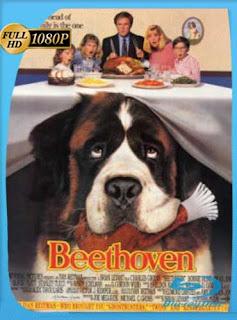 Beethoven 1992HD [1080p] Latino [GoogleDrive] SilvestreHD