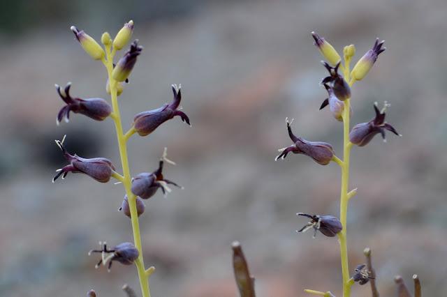 black flowers on a stem
