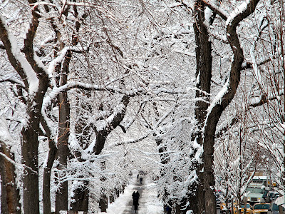 Winter Snow Storm New York City free image