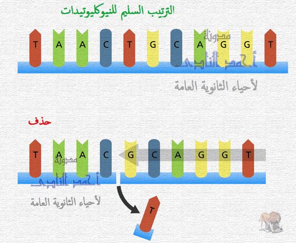 الطفرات – الثالث الثانوى - تصنيف الطفرات تبعاً لنوعها – الطفرات الجينية – حذف نيوكليوتيدة