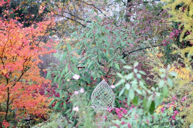 massif arbustes arbres en automne