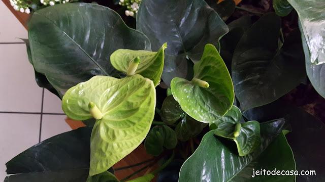 flor-anturio-verde