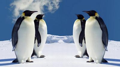 Burung Penguin